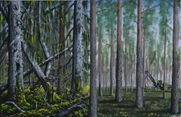 Före och efter det moderna skogsbruket