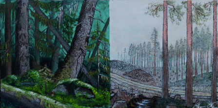 Skogen då och nu
